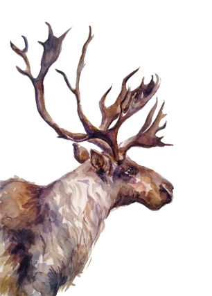caribou-5x7-print